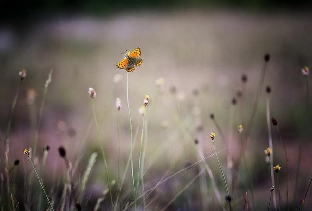 blog mirella vlinder