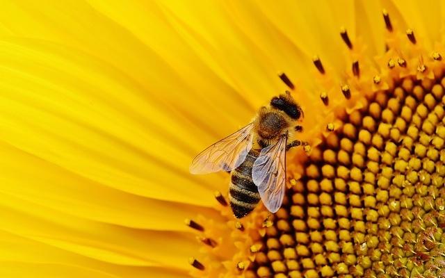 Lekker honing!