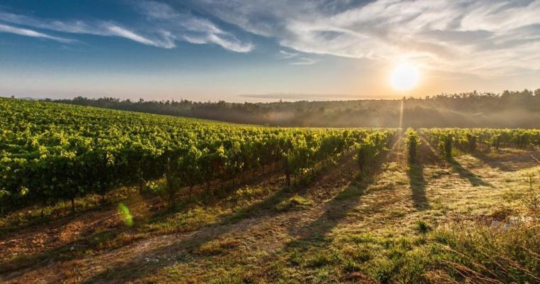 Wijntuinen, wijn uit Nederland